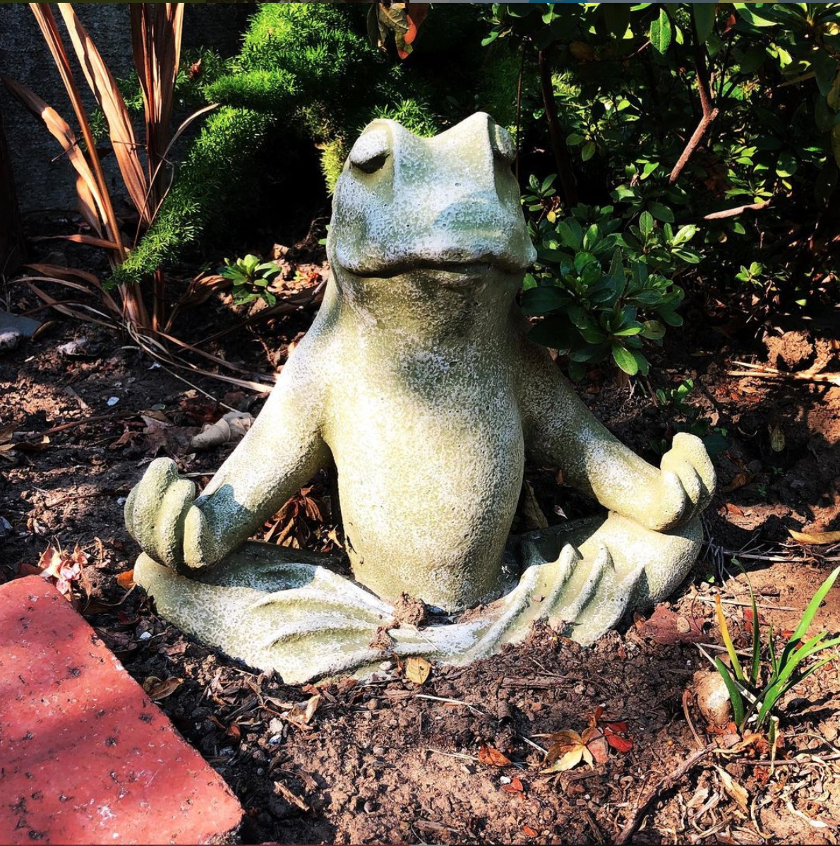A meditating frog
